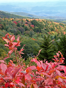 View from Scheer Bluffs