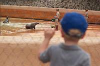 Chasing Davies Zoo