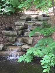 blog - Lauritzen waterfall