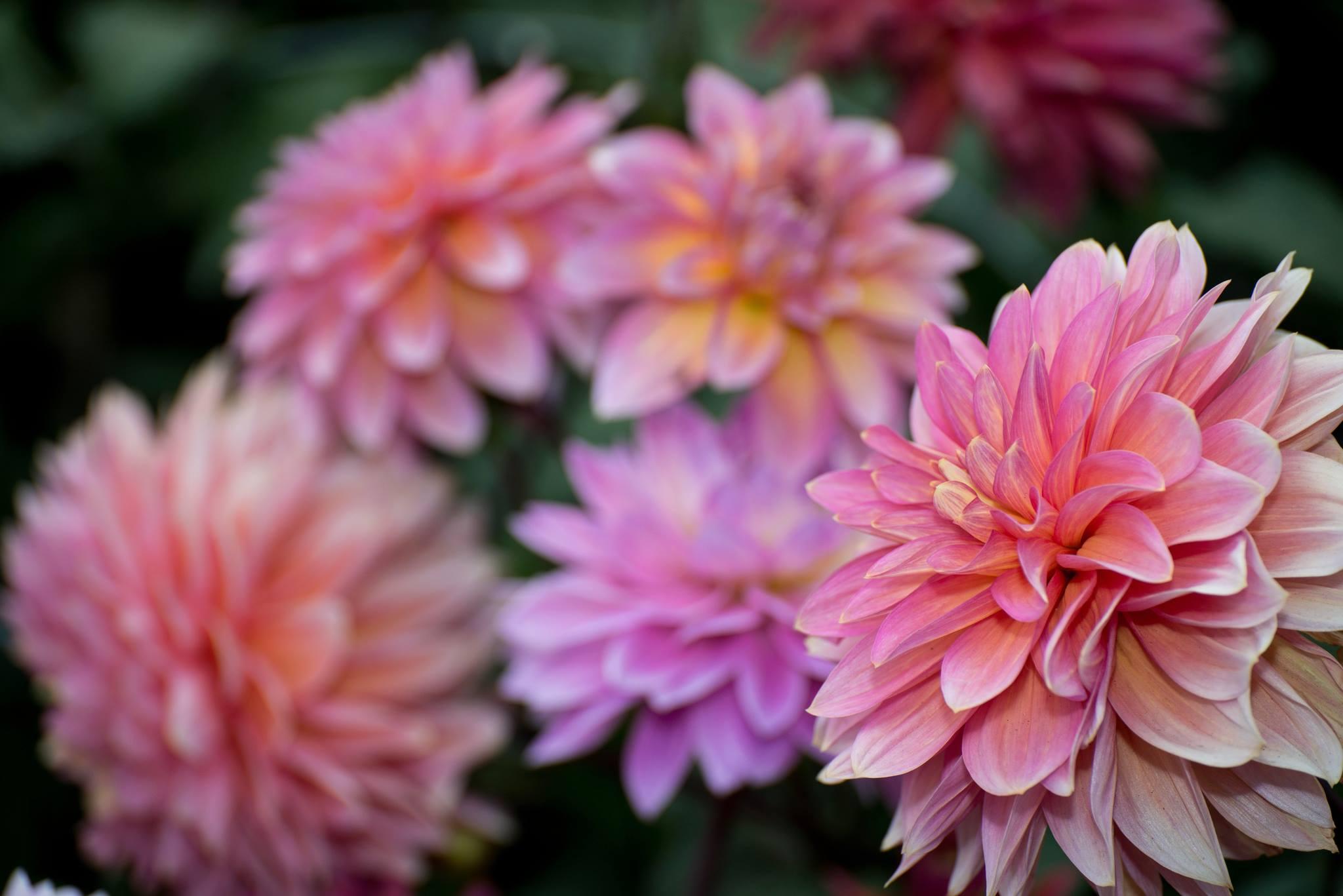 Flowers in anchorage visit anchorage izmirmasajfo