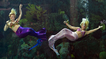 Weeki Wachee Mermaids at the Florida Aquarium