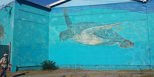 Fruitvale Sea Turtle street mural on 1024 Calcot Pl.