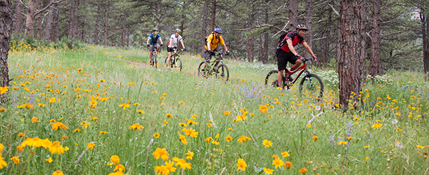 Biking Through Wildflowers Boulder