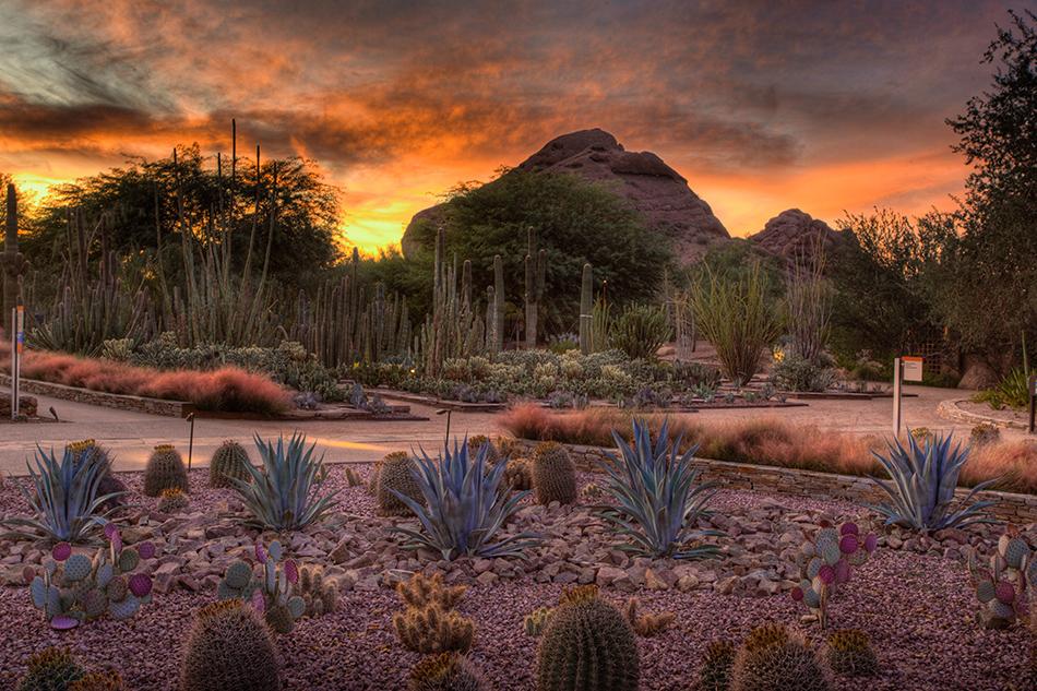 Top 10 Phoenix Attractions Visitphoenixcom