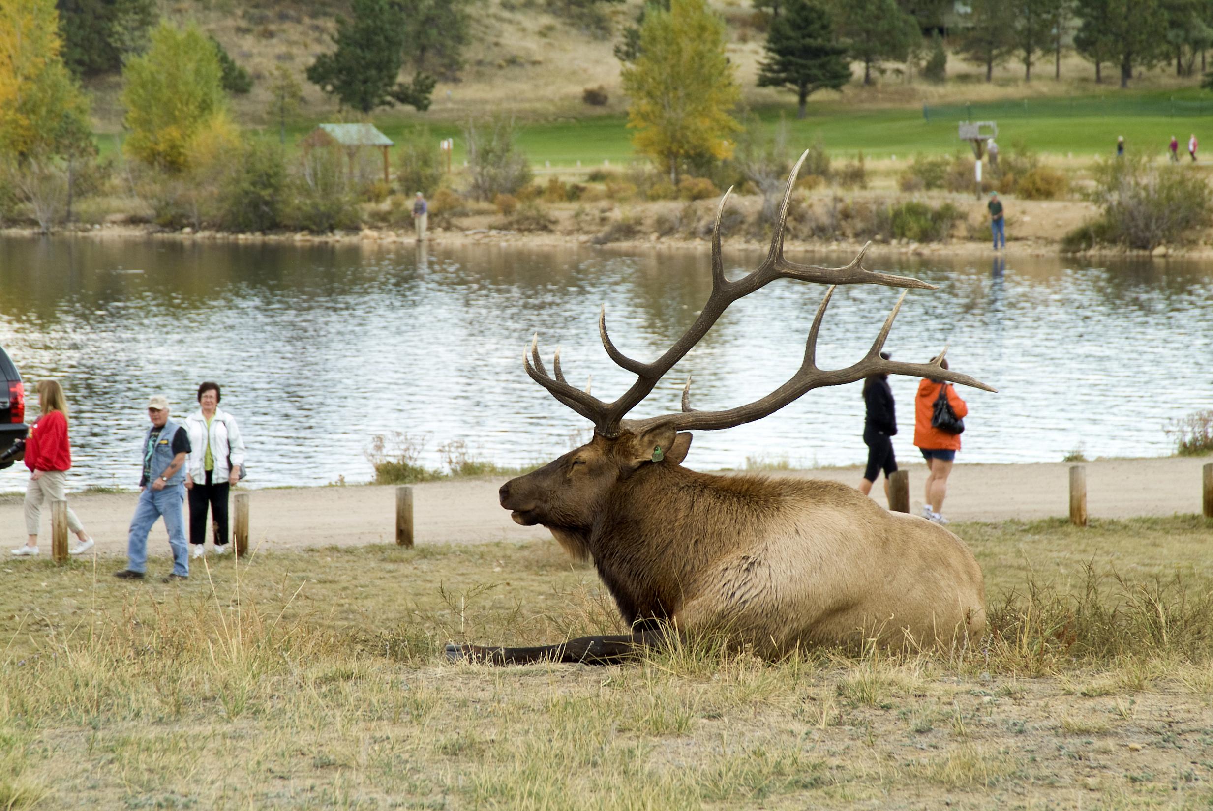 Elk Fest in Estes Park, Sep. 29 - 30 | Free Festival & Family Fun