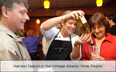 Harvest Season in the Vintage Atlantic Wine Region