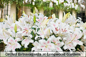 Orchid Extravaganza at Longwood Gardens