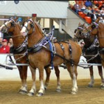 Draft Horse Show Greater Lansing Michigan
