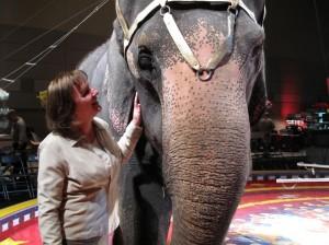 Shrine Circus Elephant in Lansing, Michigan