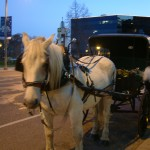 Horse & Carriage Ride in Downtown Lansing