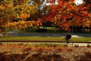 Fall Family Fun in Greater Lansing