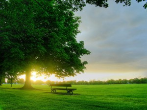 Go to a Greater Lansing park, sort out your thoughts and leave the park a happier person. Trust me.