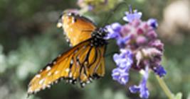 Kid Attractions in Lansing- Butterfly Garden