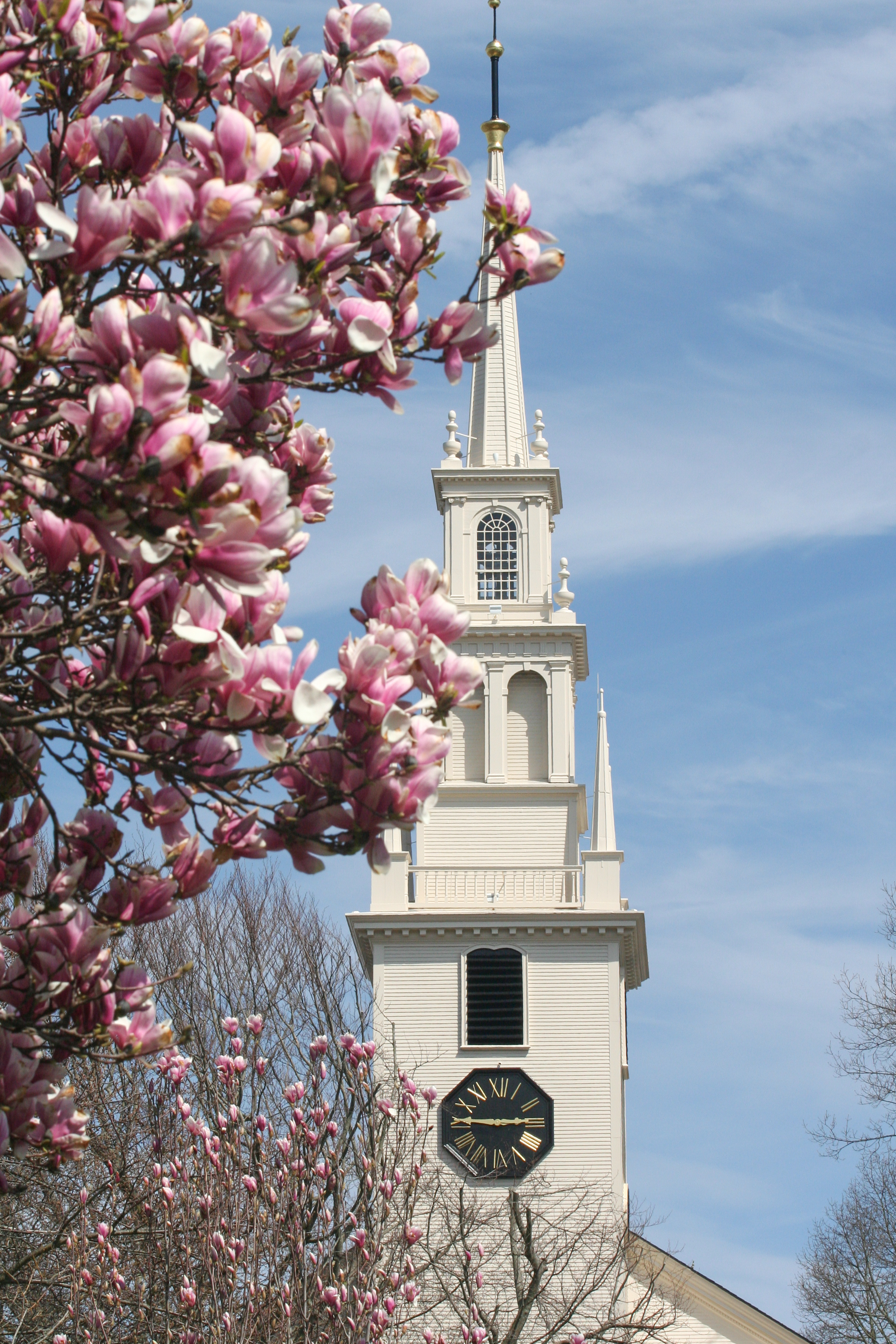 trinity steeple magnolia early spring_credit Discover Newport-0525