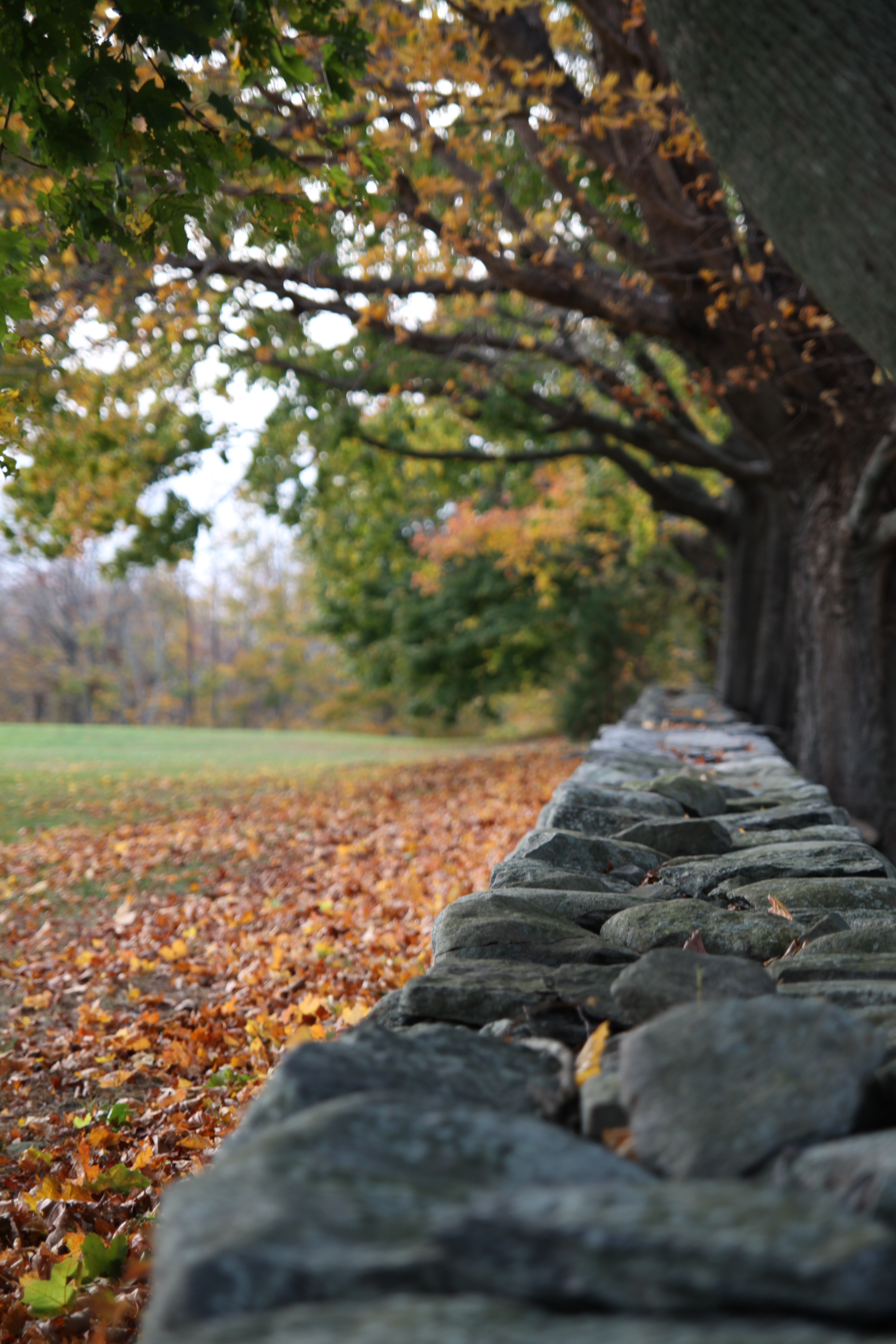 7178 fall foliage colt state park crJenniferBalch