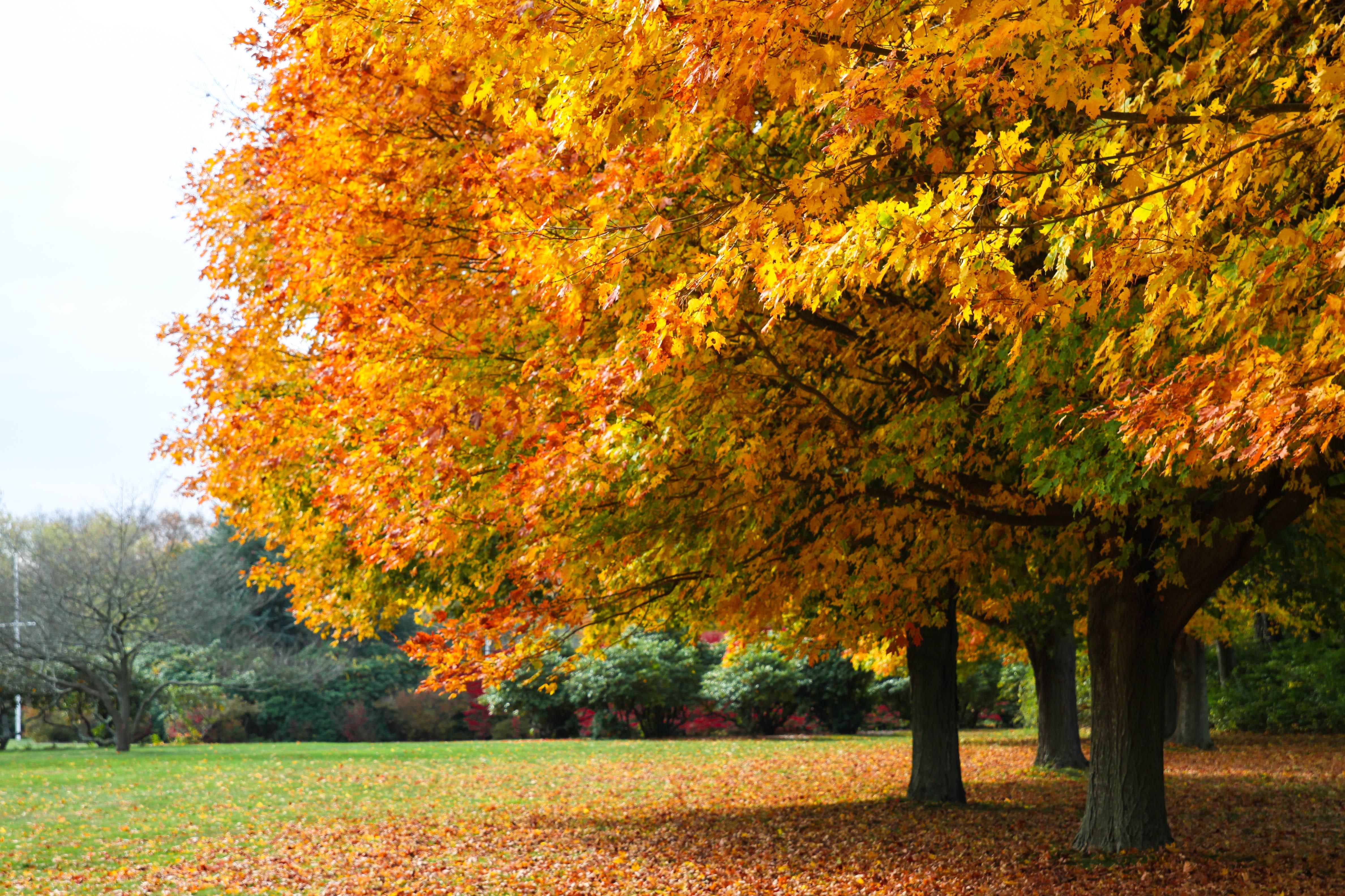 7286 fall foliage colt state park crJenniferBalch-2
