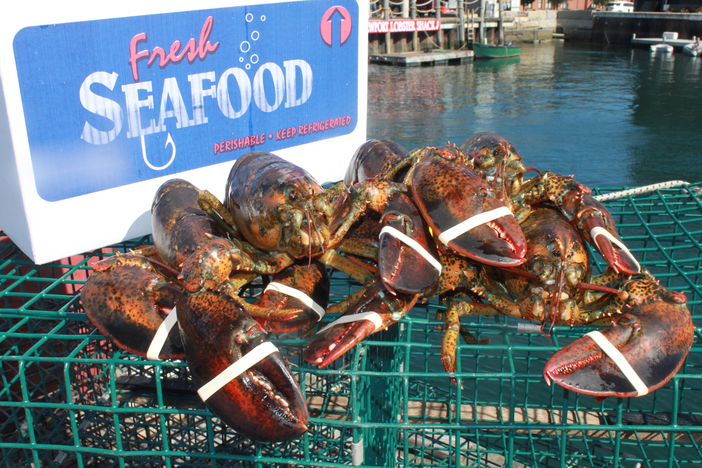Shipping Rhody Lobsters