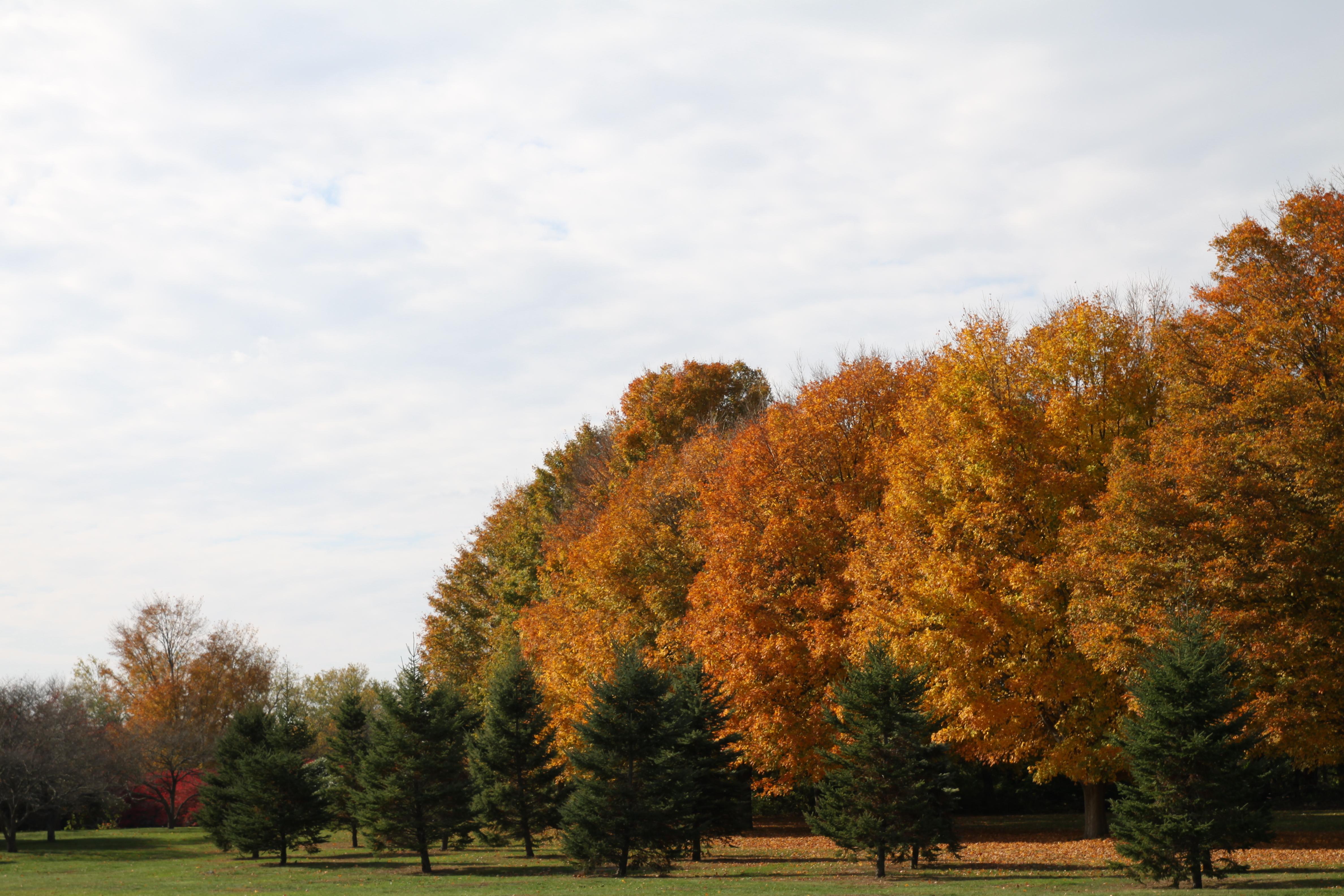 7298 fall foliage colt state park crJenniferBalch