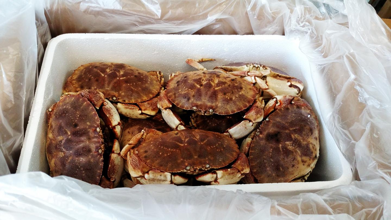 Rhode Island Rock or Jona Crabs