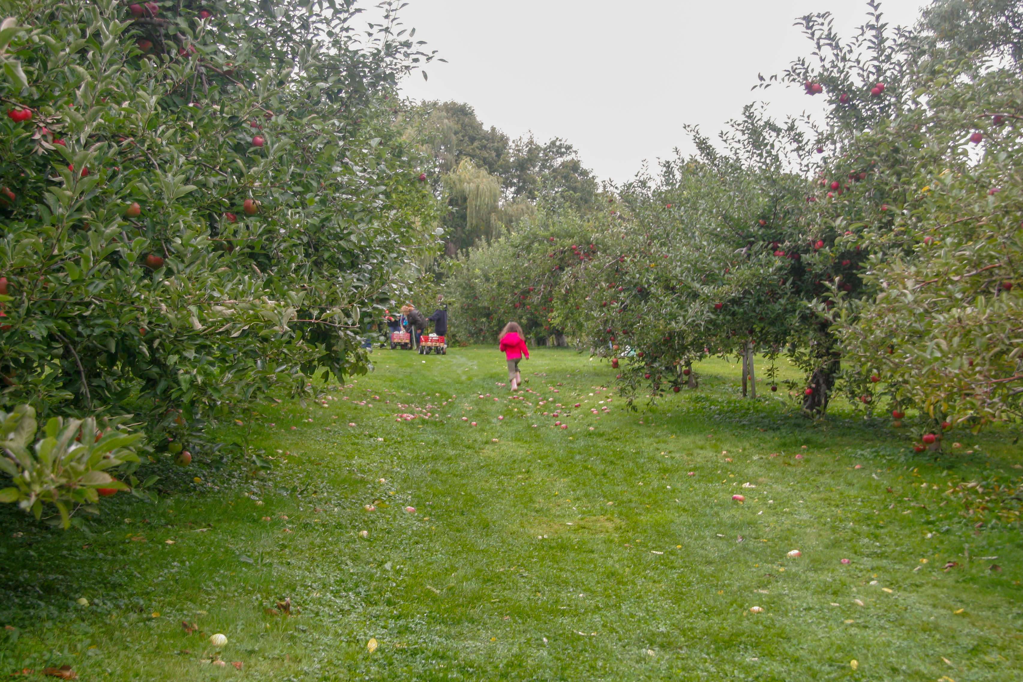 rocky brook orchard_credit Discover Newport