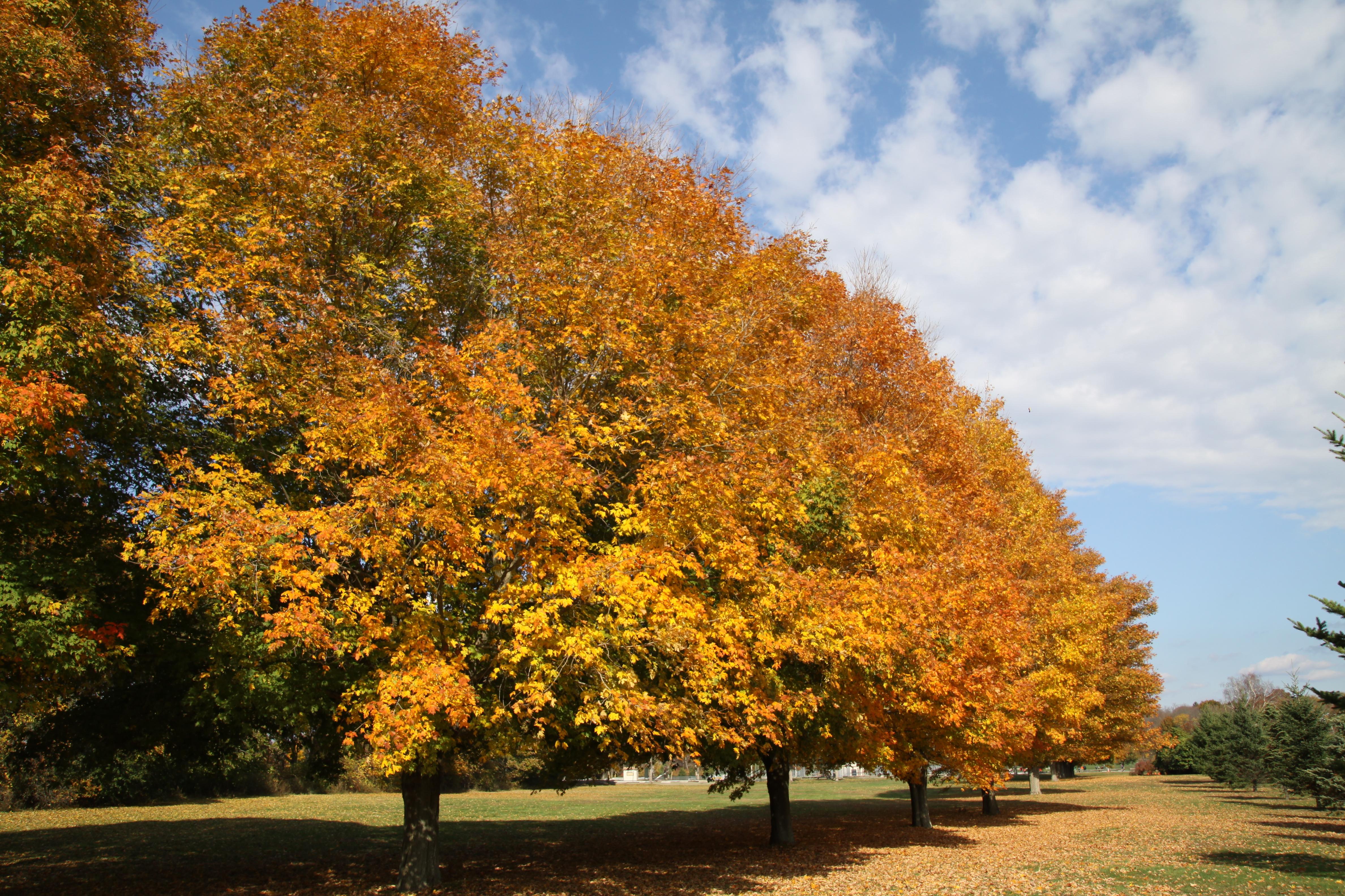 7292 fall foliage colt state park crJenniferBalch