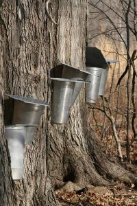 Maple Sirup Days, McCloud Nature Park, North Salem, Indiana