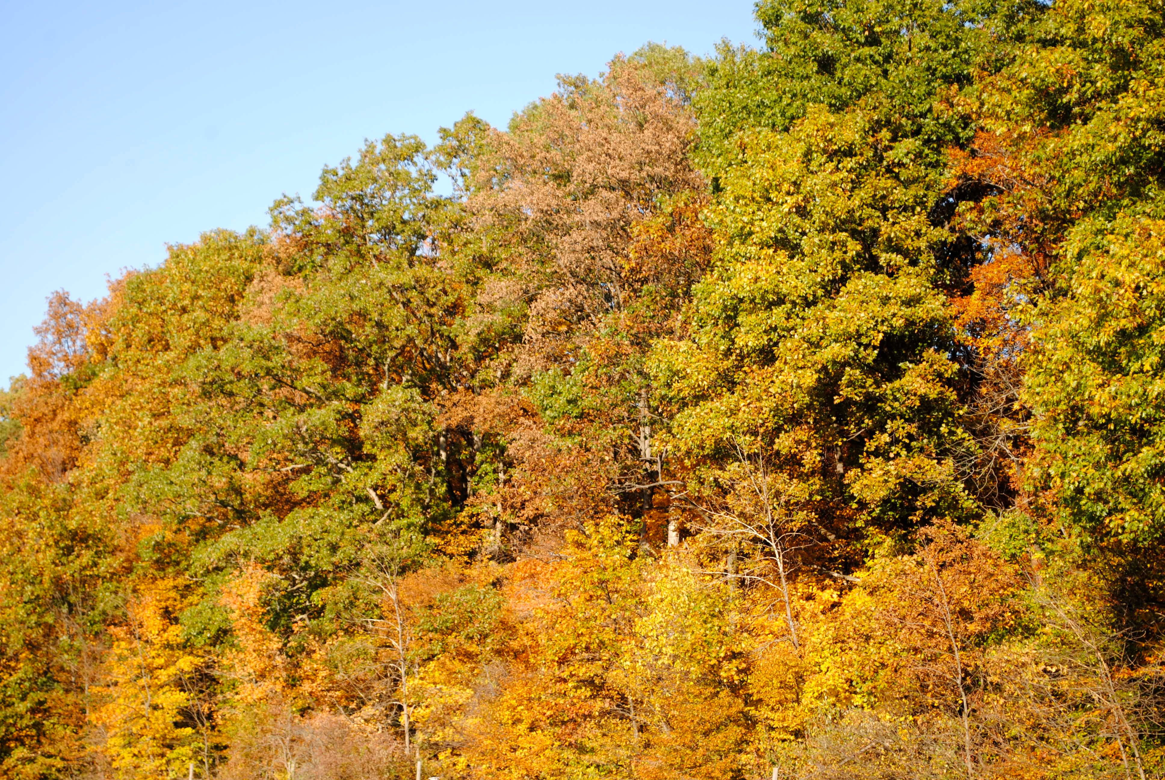 Burnett Woods Nature Preserve in Avon, Indiana, explodes with fall color.