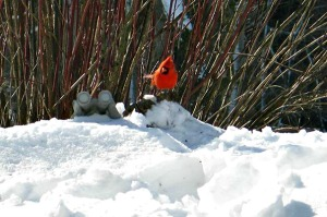 See beautiful winter birds at McCloud Nature Park in North Salem, Indiana