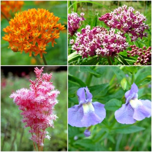 Just a few of the beautiful flowers available at the Native Plant Sale at McCloud Nature Park in Hendricks County, Indiana