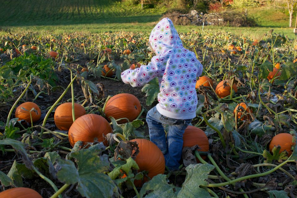 Pick a pumpkin for free at Nehemiah Ranch in Avon during Fall Harvest Days. (All photos courtesy of Nehemiah Ranch)