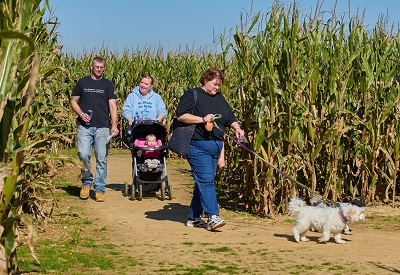 Beasley's Orchard Dog Daze in the Corn Maze in Danville, Indiana