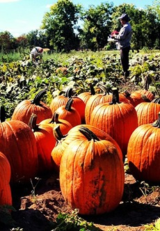 Hogan Farms - Pumpkin Patch
