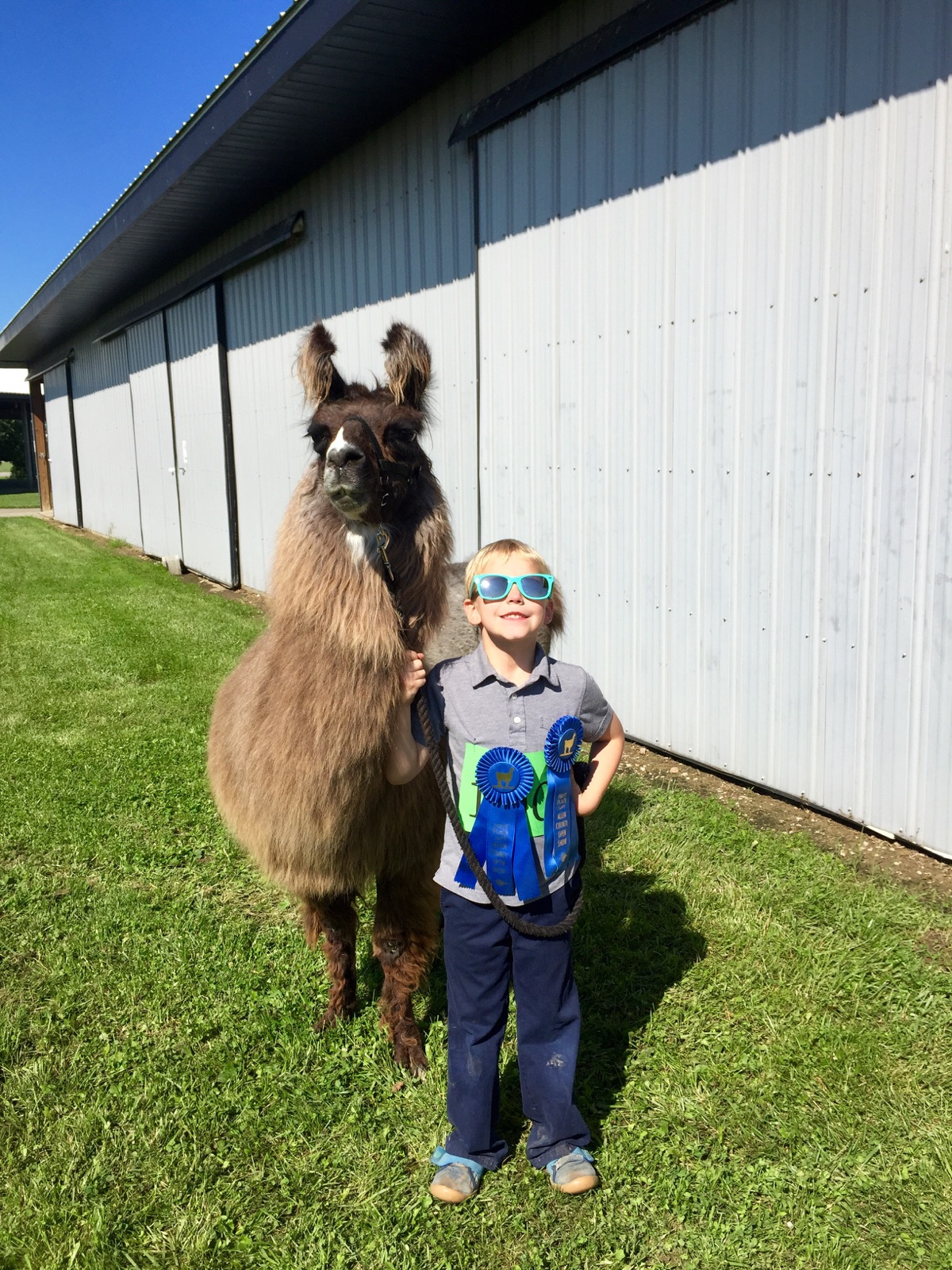 You'll see a variety of animals being shown at the Allen County Fair, including llamas!