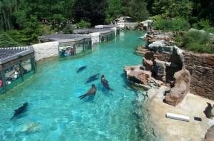 Fort Wayne Children's Zoo - Sea Lion Beach (2)