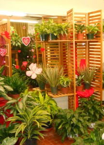 The Green Thumb Room has lots of different houseplants - small to large - perfect for any housewarming needs!