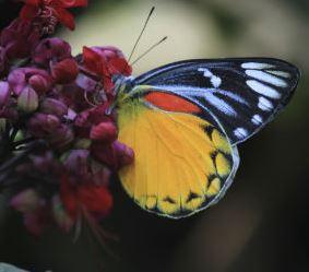 butterfly_slide
