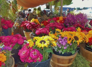 These are some of the colorful fresh flowers for sale at the Farmer's Market at the Johnny Appleseed Festival.