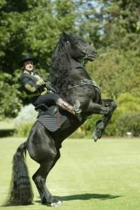 Royal Horses_001 copy