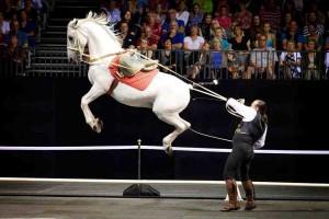 Royal Horses_002 copy