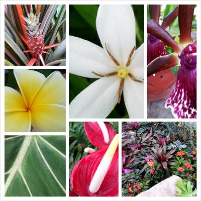 Nicholas Conservatory flowers