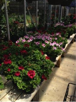 garden blog_3