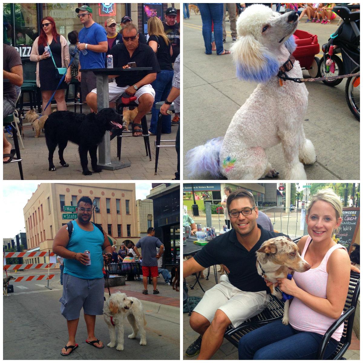 great downtown dog walk 3