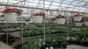 This is just one of the many greenhouses at Cox's Plant Farm that is chock full of stuff to plant in your yard or garden.