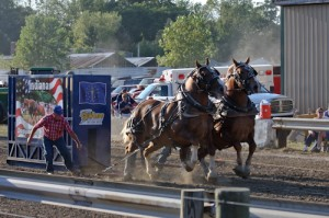 The size and power of the horse pull's draft-horse teams will awe anyone.