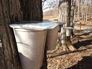Maple Sirup Days returns this weekend to McCloud Nature Park.