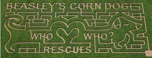 Beasley Orchard's 2013 Corn Maze design.