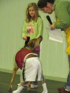 """This dog was part of the """"Any-Dog"""" Dog Show at Dogtona."""
