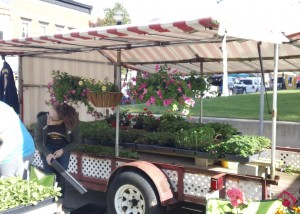 Plenty of flowers and fun at the Geranium Festival in Danville