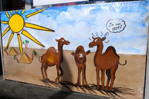 Visit the historic Courthouse Square in Danville to read about Clarence the Christmas Camel on business windows.