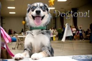 There's plenty for your pup to do at the Dogtona Dog Show